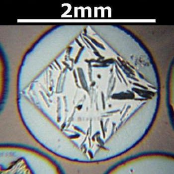 SPI Supplies Brand Standards For Microanalysis, Minerals CMTaylor Collection Biotite, Mounted